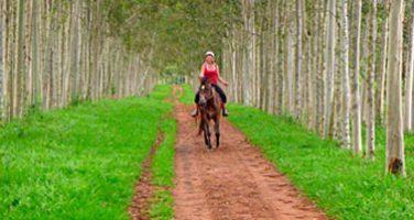 Cavalgada em Brotas